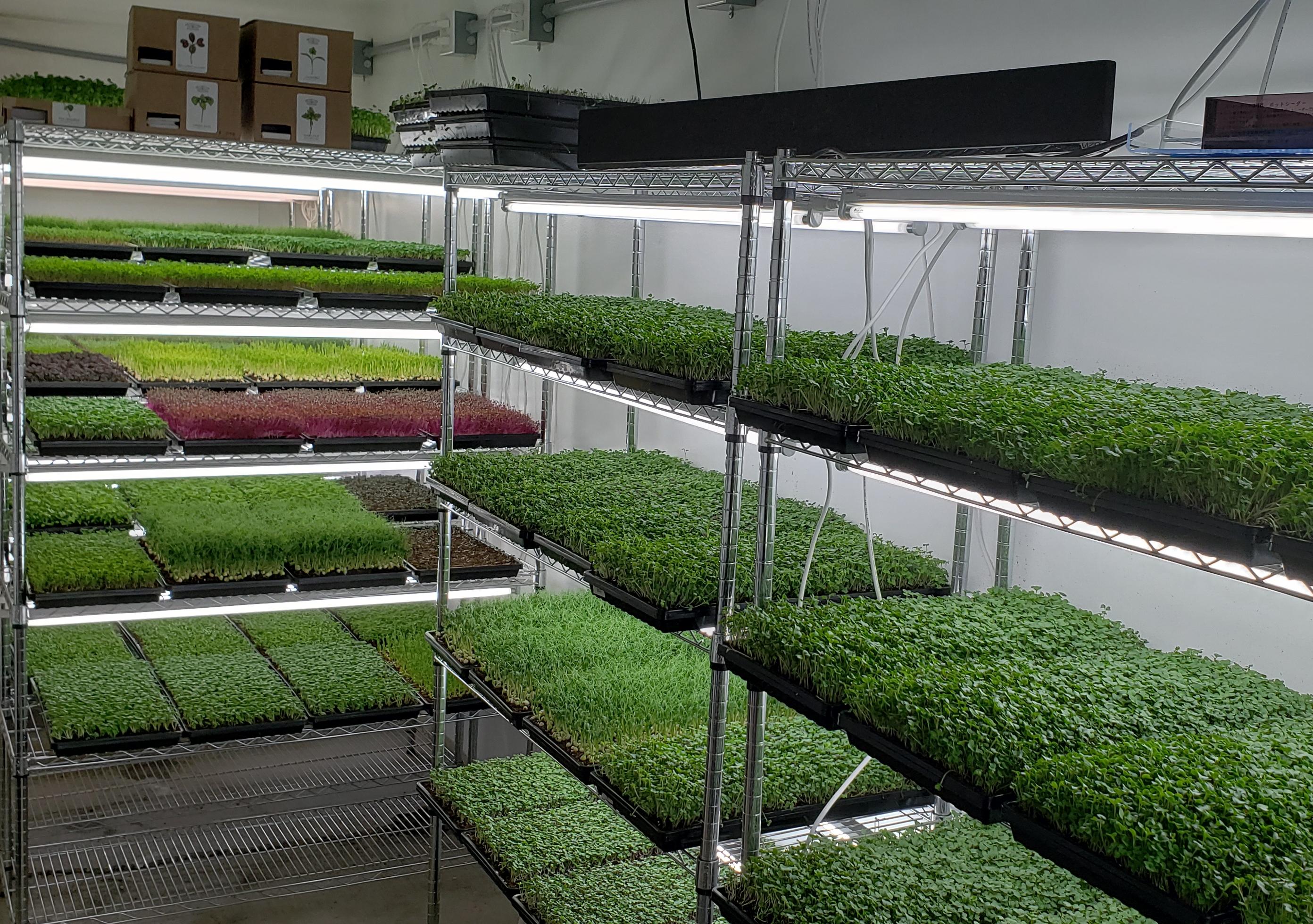 Starting The Best Microgreens Business | Microgreens Farmer