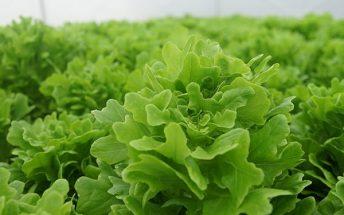 microgrren-farms